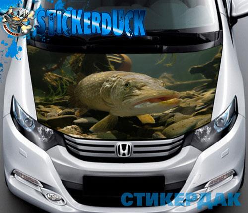 наклейки о рыбалке на авто в спб